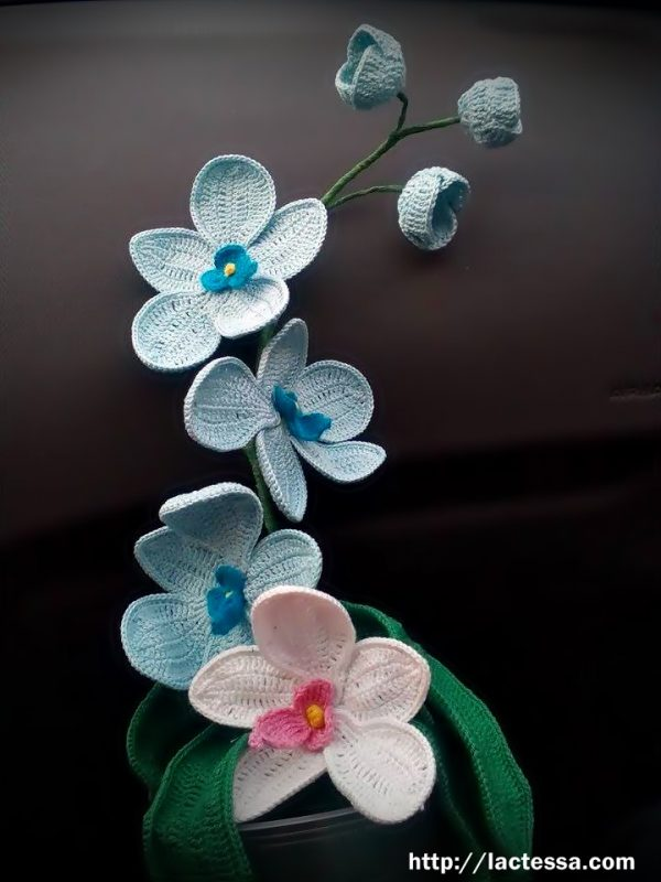 Орхидея Фаленопсис с кауза!