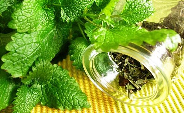 Чай от маточина успокоява и прочиства тялото